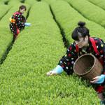 bevanda antiossidante , il tè verde e bianco