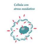 Stress Ossidativo e Obesità - Effetti della restrizione calorica