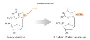 Nucleobases oxidation